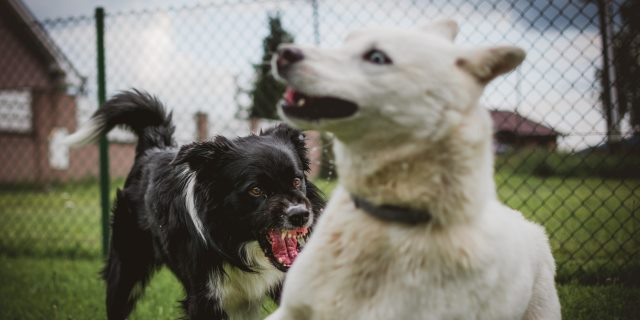 comportamiento territorial en perros