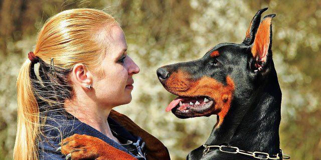 perro golpea hocico para comunicar