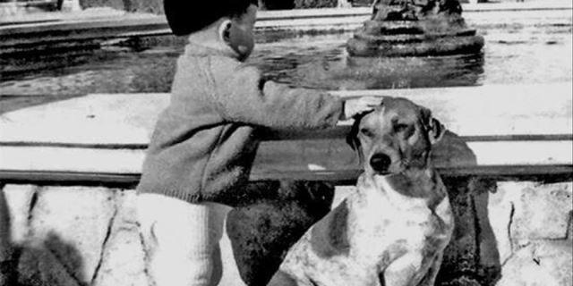 Tarzán el perro famoso de Alicante en los 60