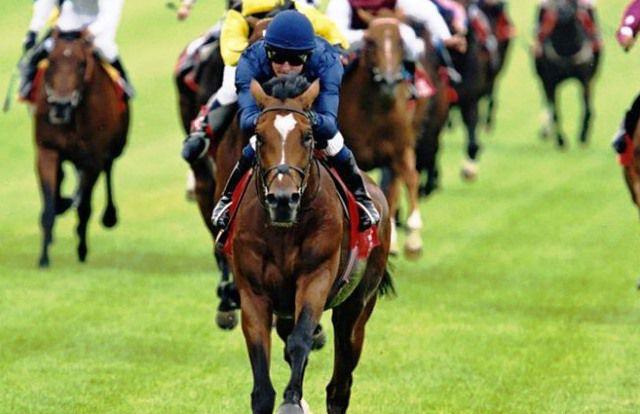 El caballo Galileo compitiendo