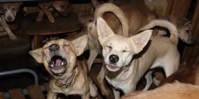 rescate de perros en Japón