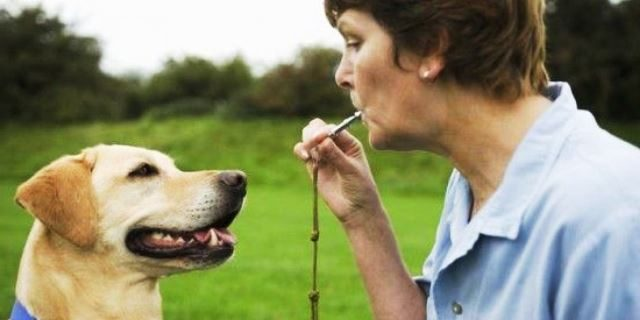 silbato para perro