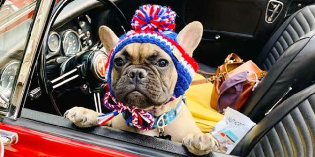Wilbur perro alcalde