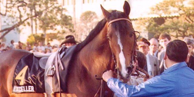 Exceller caballo