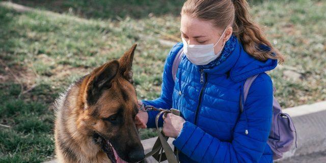 adopciones aumentan y crece el censo de mascotas en Aragón
