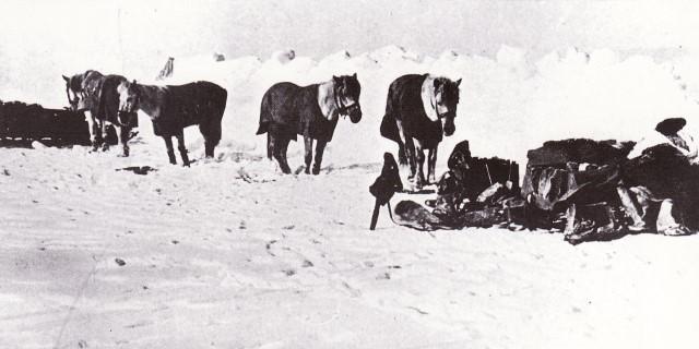 caballos conquista polo sur