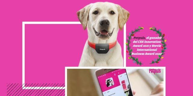 Petpuls collar inteligente para perros