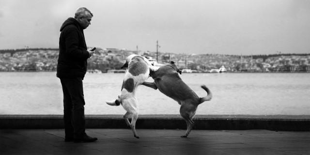 perros juegan si les miran