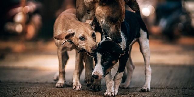 perros de Zaragoza atendidos