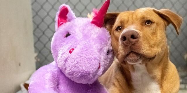 Sisu y su juguete unicornio