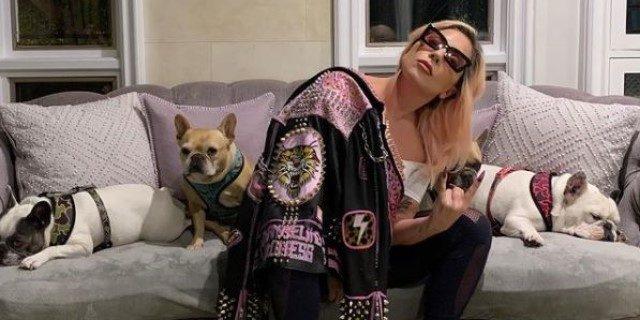 Bulldogs franceses, los perros de Lady Gaga