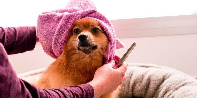 Tipo de pelo de un perro