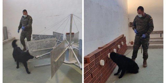 Soco, el perro del Ejército que detecta casos de la Covid-19