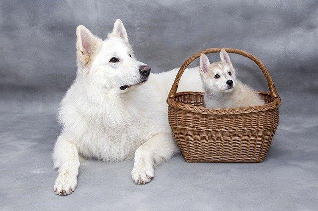 Hasta cuando crecen los perros
