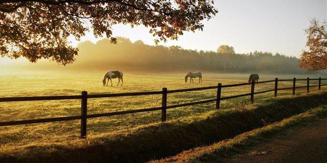 ¿Qué debe comer un caballo?
