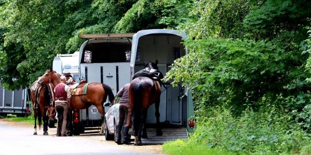 caballos con DNI equino