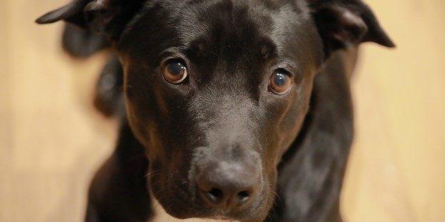 Condena por maltrato animal