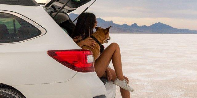 Normas viajar coche perro