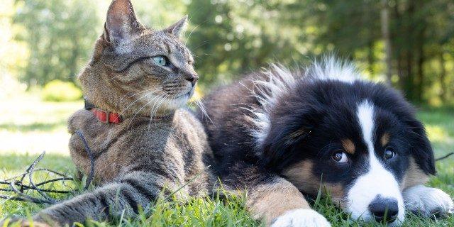 Campaña en Valladolid por la tenencia de mascotas