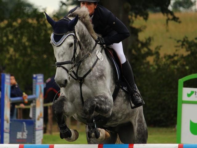 caballo maltratado juegos olímpicos