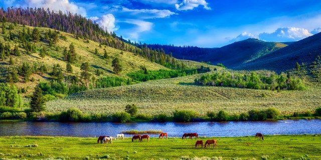 cuántos caballos salvajes quedan