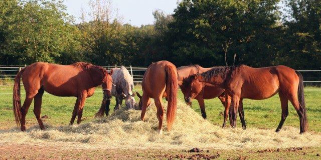 carbunco en caballos de Badajoz
