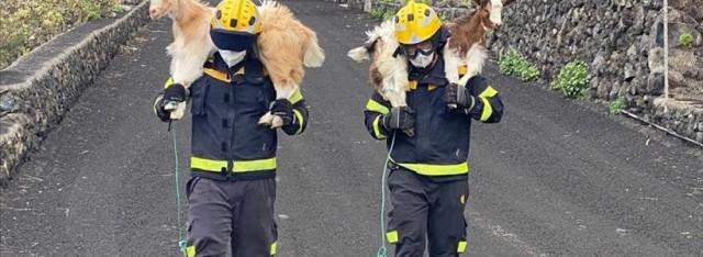rescate de animales erupción en La Palma