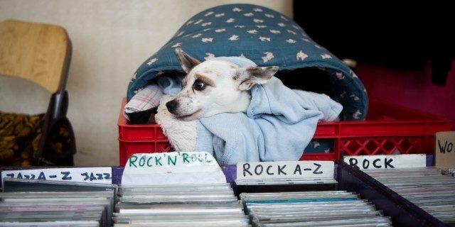 mejor música para perros