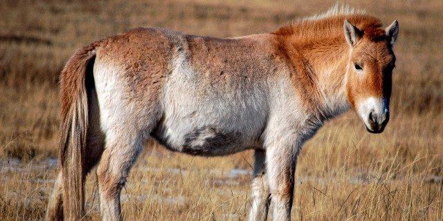 Obesidad y asma en caballos