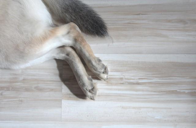 como hacer para que mi perro no raye el suelo