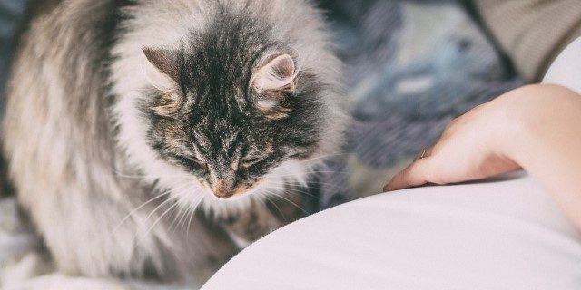 Tratar la alergia a Mascotas