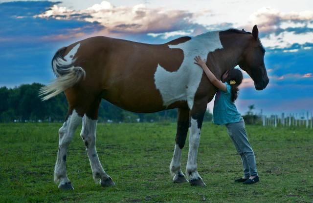 caballo de monta