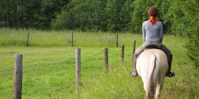 caballo para monta