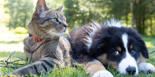 Ley de Protección Animal