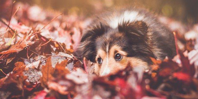 cómo cuidar de un perro en otoño