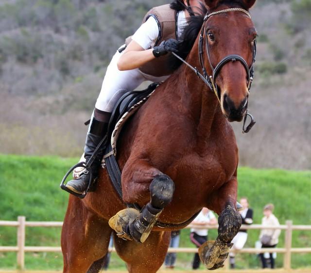 mejores razas de caballo de salto